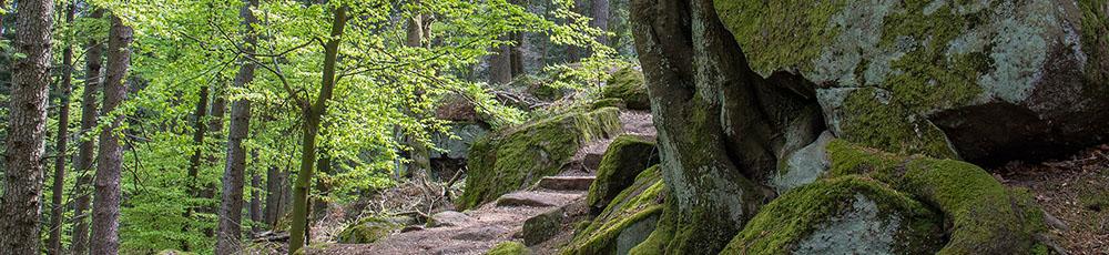 Odilienberg Weg zum Beckenfels